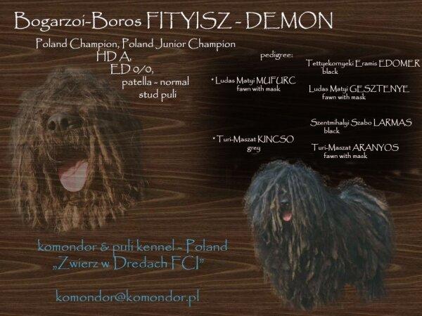 JChPl, ChPl. Bogarzoi-Boros FITYISZ (DEMON)